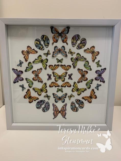 Framed Butterflies wm